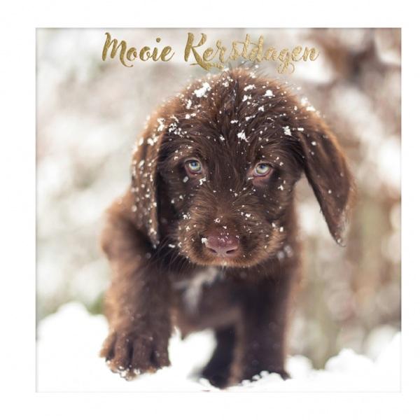 07-Dog-snow